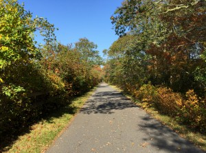 The Cape Cod Rail Trail in the fall.