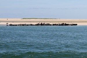 cape cod seal watch