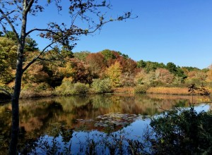 cape cod walking trails