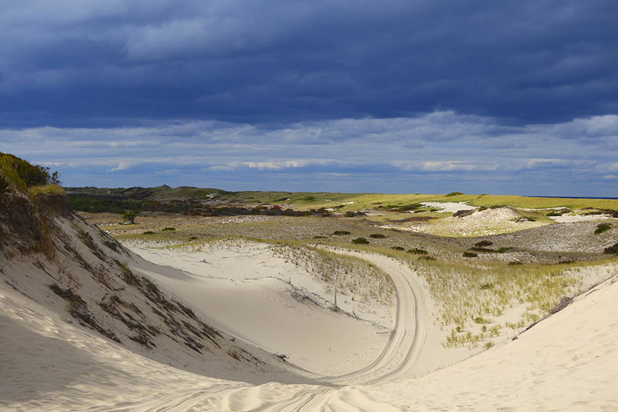 Art's Dune Tours (via website)